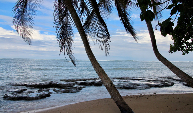 A palm tree leaning over a gorgeous beach in Cahuita National Park in Costa Rica