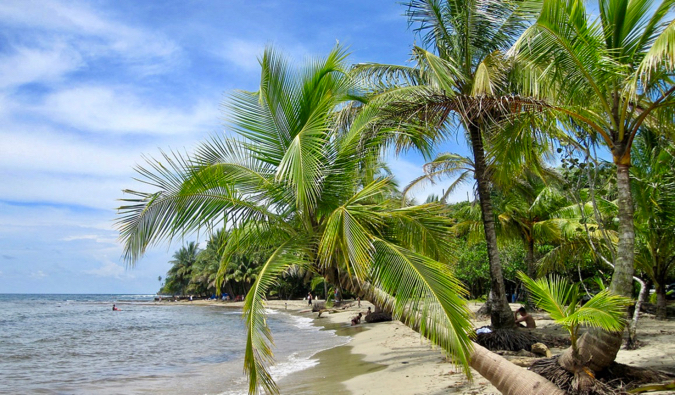 A leaning palm tree on a gorgeous beach in Manzanillo, Costa Rica