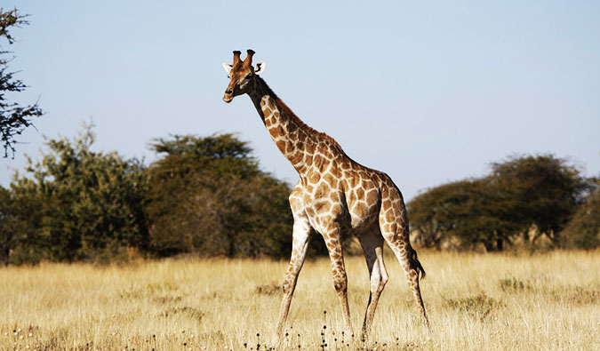 A stunning photo from a safari in Etosha National Park, Namibia