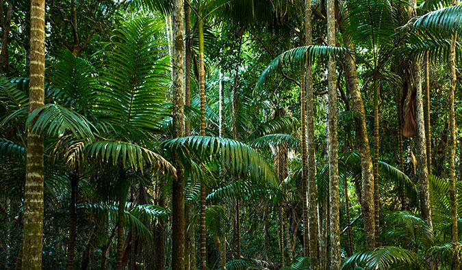 cape tribulation jungles