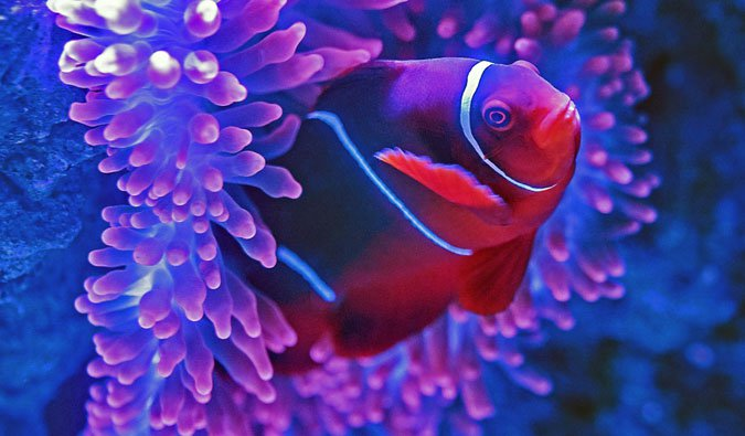 the beautiful great barrier reef fish